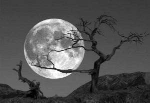 «Il Sole ci dà la luce, ma la Luna ci regala l'ispirazione
