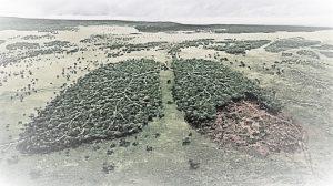 Brasile-deforestazione